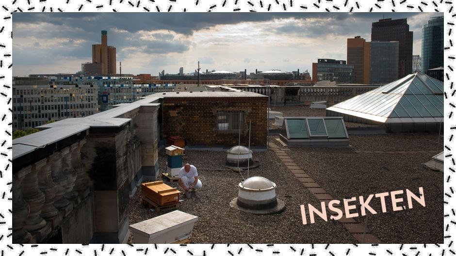 Biene müsste man sein. Dann könnte man an solch illustren Adressen wie auf dem Dach des Berliner Abgeordnetenhauses residieren. Foto: Ulrike Chemnitz/ Berlin summt!