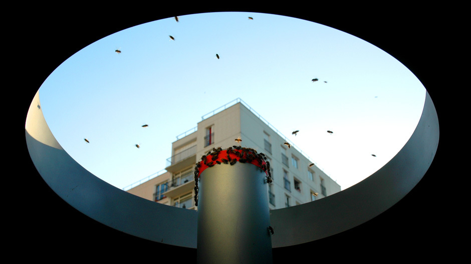 Die Biene in der Kunst: das Projekt Honey Bank von Olivier Darné.