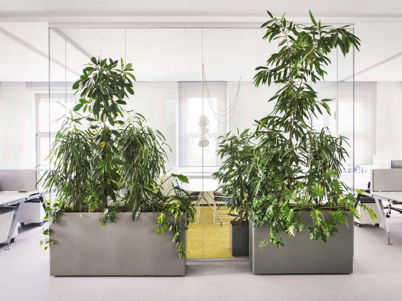 Studio Plants, Phoenix GmbH, 2019, Pflanzen: Objektbepflanzung J.Reiffer, Foto: Sarah Weiselowski