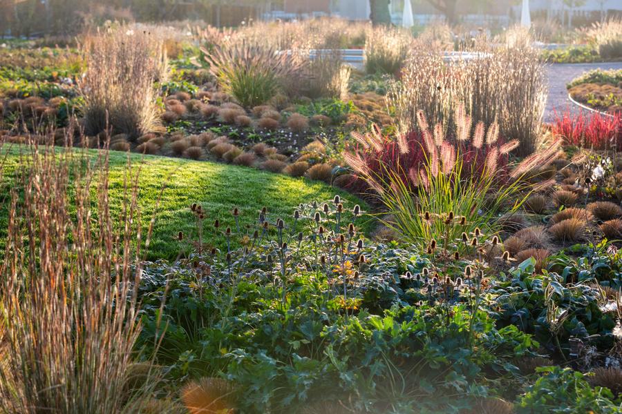 Gartengestalter Piet Oudolf über tanzende Felder, wilde
