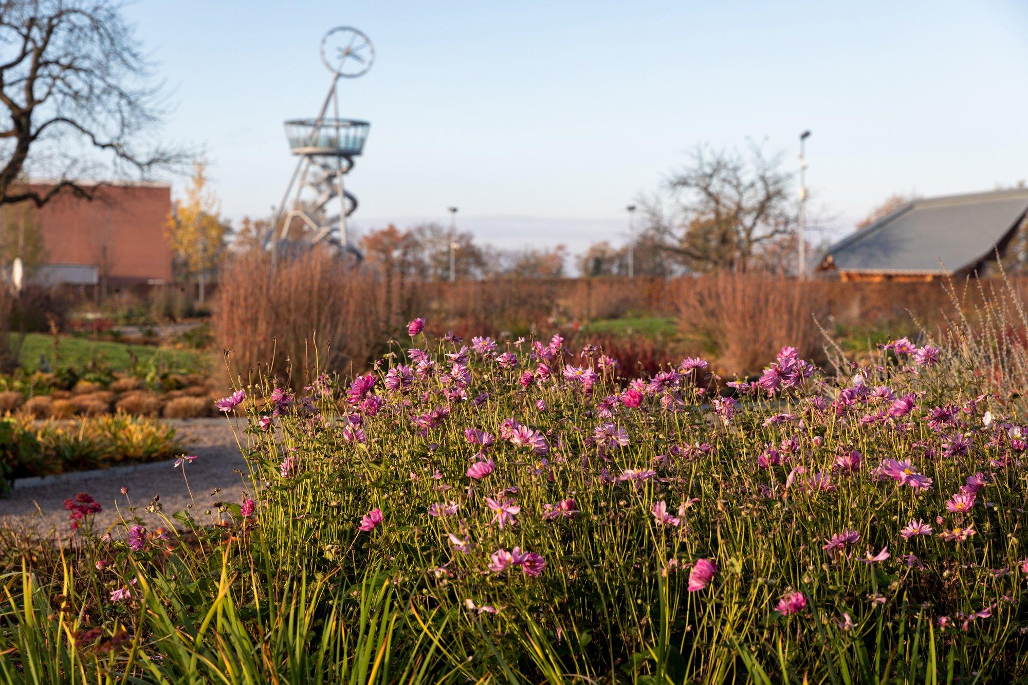 Piet Oudolf Gartenauf demVitra Campusin Weil am Rhein /November2020 / Foto: @ Vitra