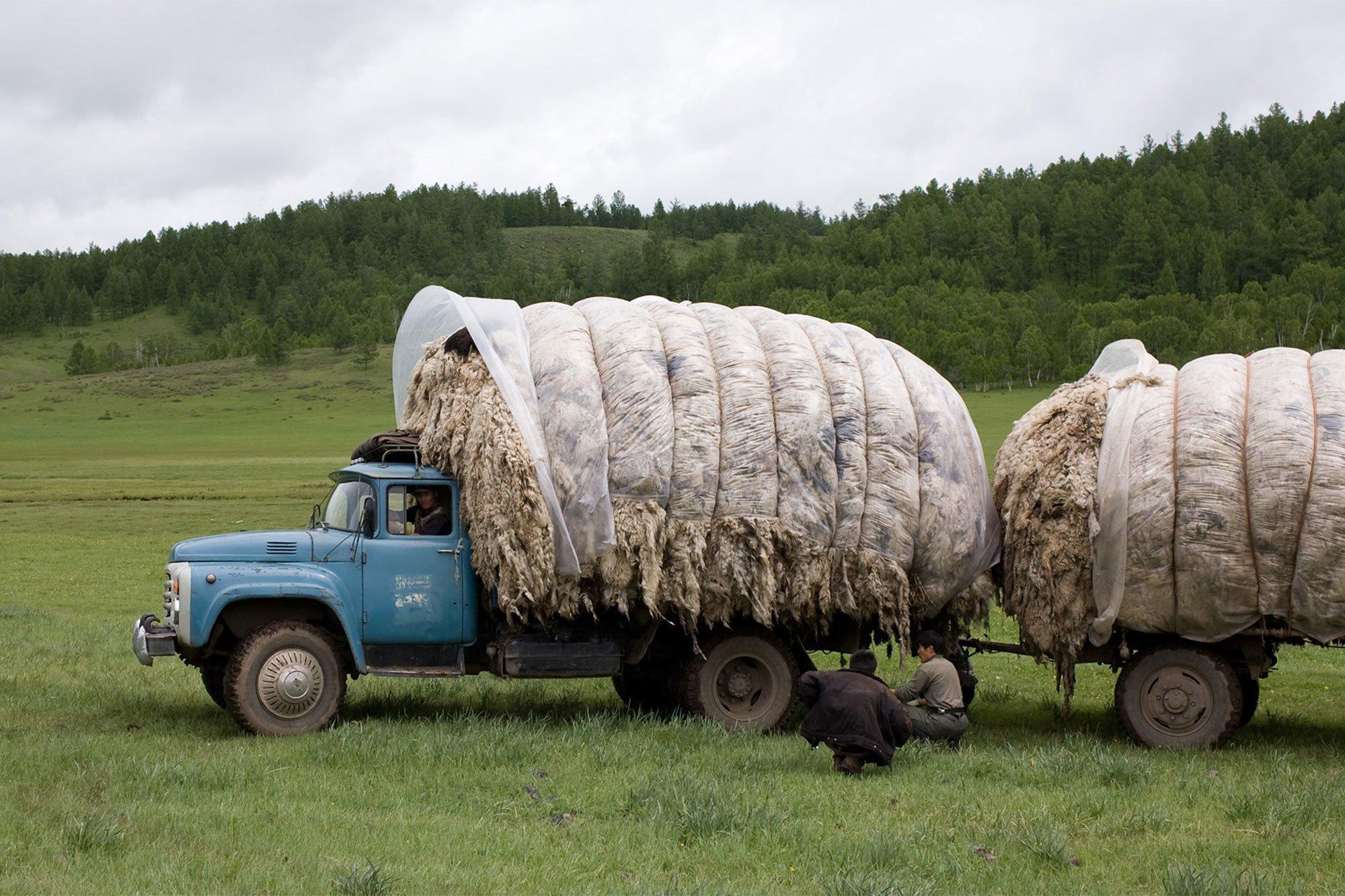 Seit 60 Jahren stellt tretford textile Bodenbeläge mit Kaschmir-Ziegenhaar aus der Mongolei her.