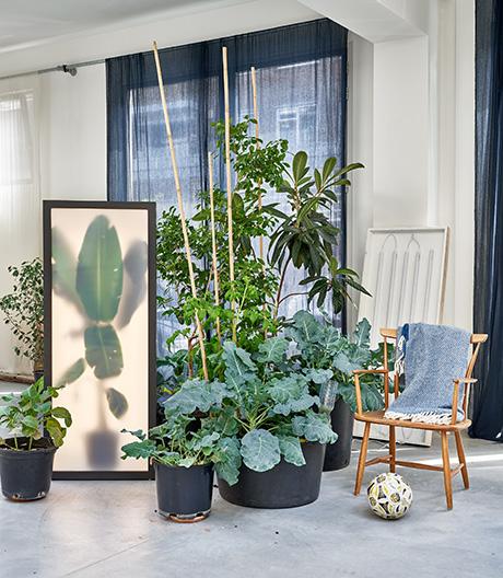 Ein Leuchtkasten für große Exoten von Rem Atelier.